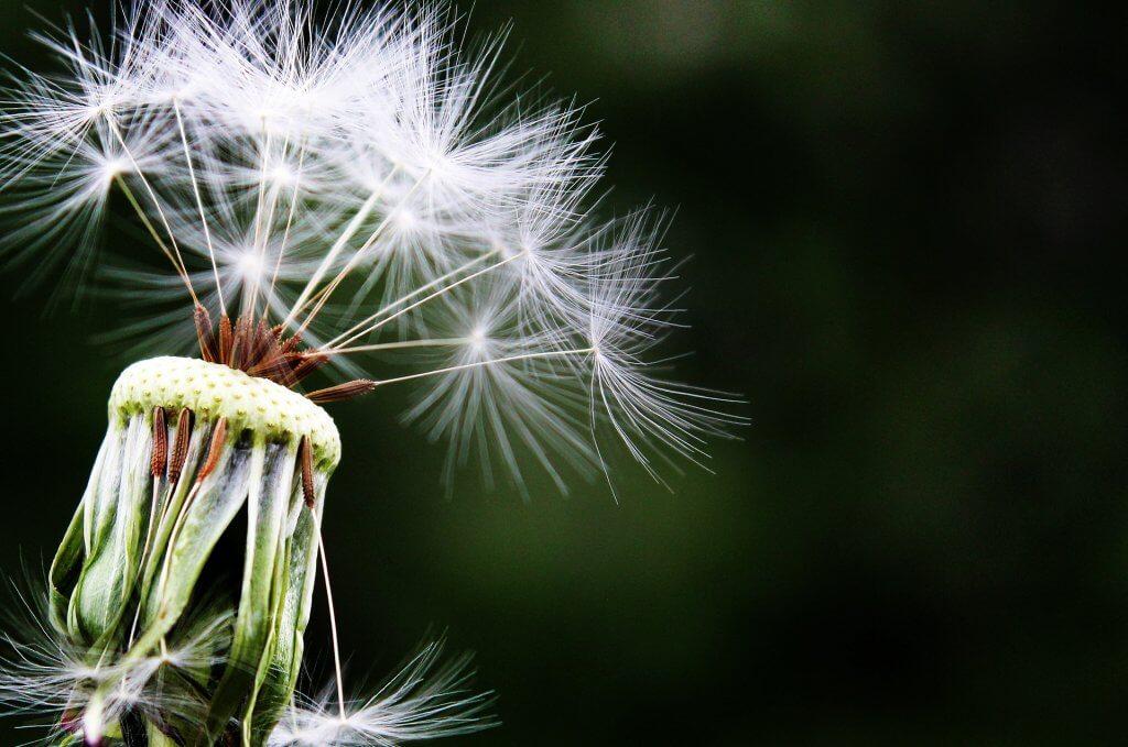 Alergie wziewne u dorosłych – czy uczulenie może się pojawić z wiekiem? Sposoby domowe na alergię