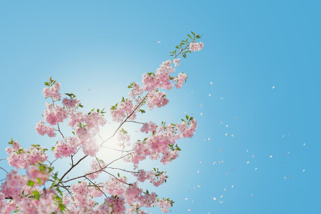 Alergiku, przygotuj się na wiosnę!