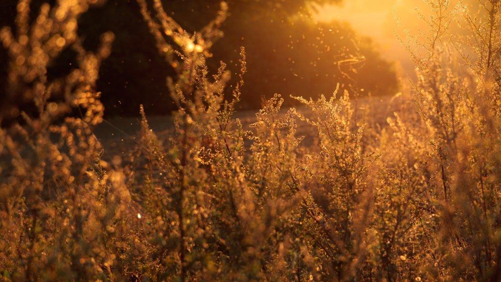 Alergiczne krzyżówki – czym są? Dlaczego występują?